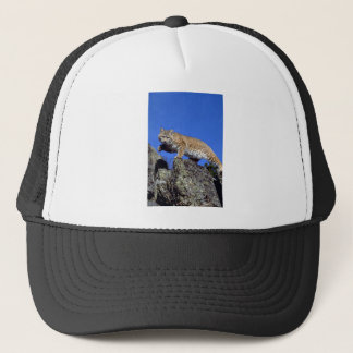 Bobcat skylined trucker hat