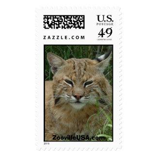 Bobcat sm, ZoovilleUSA.com Postage Stamp