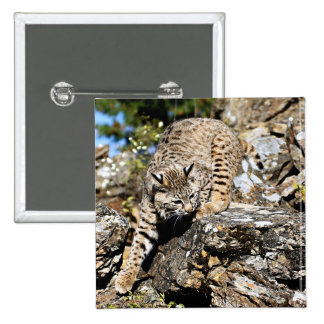 Bobcat sneaking down the cliff pinback button