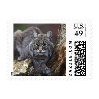 bobcat stamp