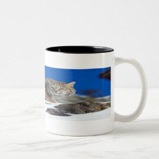 Bobcat Stare Mug