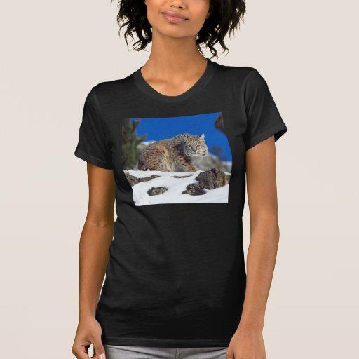 Bobcat Stare Shirt