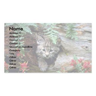 Bobcat-summer-young kitten in hollow log business card