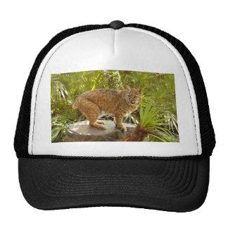 BobcatBCR002 Trucker Hat