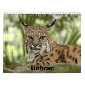 BobcatBCR031, lince Calendario De Pared