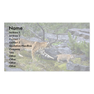 Bobcats-summer-mom with small kitten business card