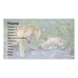 Bobcats-summer-mom with small kitten business card template