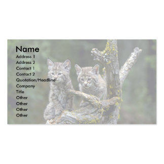 Bobcats-summer-young kittens business cards