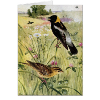 Bobolinks, Daisies and Pink Clover Card