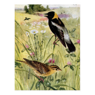 Bobolinks Daisies and Pink Clover Postcard