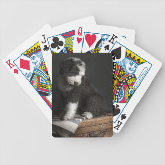 Bobtail puppy portrait in studio bicycle playing cards
