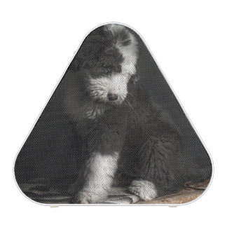 Bobtail puppy portrait in studio bluetooth speaker