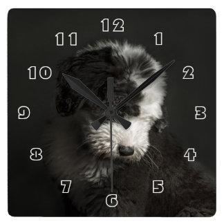 Bobtail puppy portrait in studio square wallclock