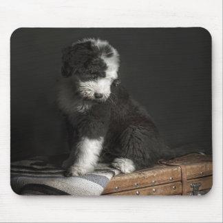 Bobtail puppy portrait in studio mouse pad