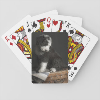 Bobtail puppy portrait in studio playing cards