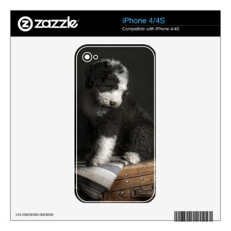 Bobtail puppy portrait in studio skins for iPhone 4S