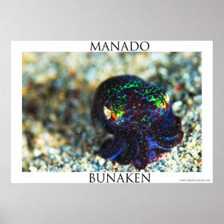 Bobtail Squid in Manado Poster