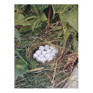 Bobwhite Nest Full of Eggs Postcard