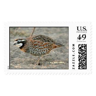 Bobwhite Quail -1,  Kay Miller 2007 Stamp