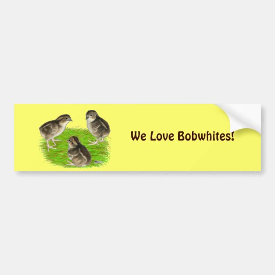 Bobwhite Quail Chicks Bumper Sticker