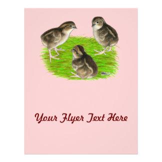 Bobwhite Quail Chicks Full Color Flyer