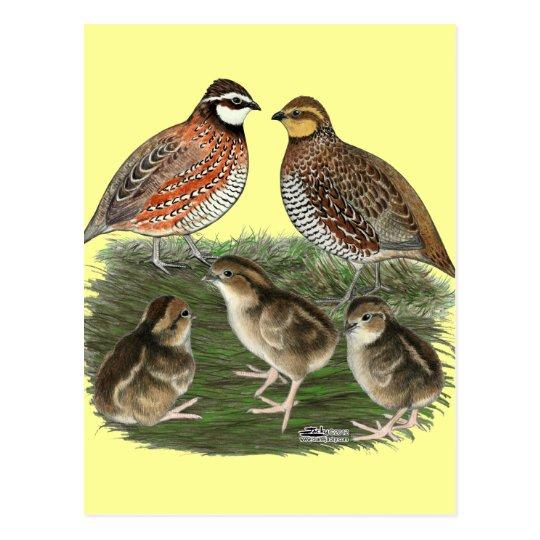 Bobwhite Quail Family Postcard