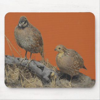 Bobwhite Quail (Georgia, Missouri and Tennessee) Mouse Pad