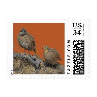 Bobwhite Quail (Georgia, Missouri and Tennessee) Postage
