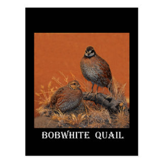 Bobwhite Quail (Georgia, Missouri and Tennessee) Postcard