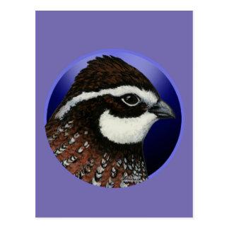 Bobwhite Quail Head Circle Postcard