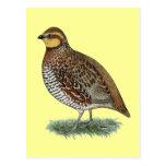 Bobwhite Quail Hen Postcard