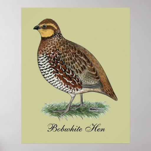 Bobwhite Quail Hen Print