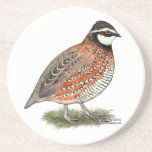 "Bobwhite Quail Rooster Drink Coaster<br><div class=""desc"">The little Bobwhite quail is a beloved game bird over much of its range.  The coloring is quite variable,  a typical rooster is shown here.</div>"