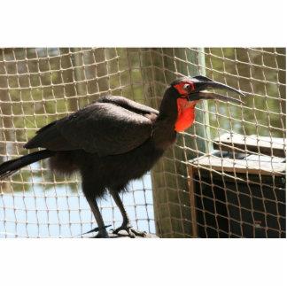 boca abierta de la garganta roja negra del pájaro esculturas fotográficas