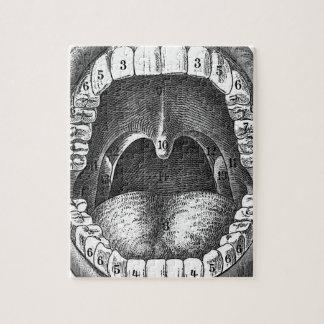 Boca anatómica del vintage puzzle
