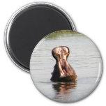 Boca del hipopótamo (alrededor de o imán cuadrado)