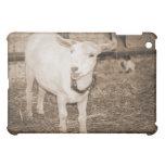 Boca doeling de la cabra de la sepia de Saanen abi