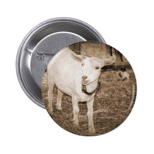 Boca doeling de la cabra de la sepia de Saanen abi Pin