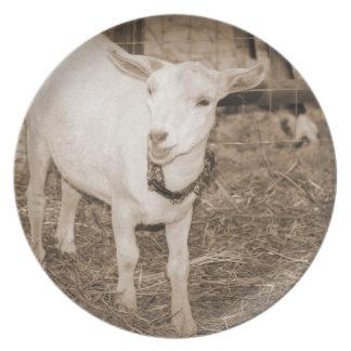 Boca doeling de la cabra de la sepia de Saanen abi Plato De Cena