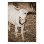 Boca doeling de la cabra de la sepia de Saanen abi Tarjetón