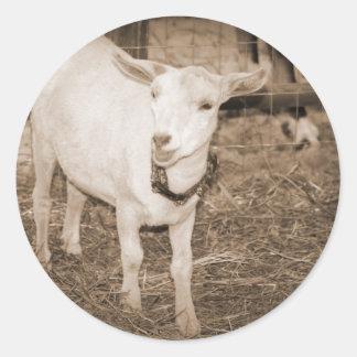 Boca doeling de la cabra de la sepia de Saanen Pegatina Redonda