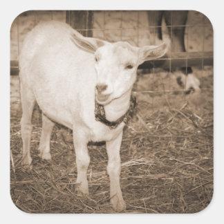 Boca doeling de la cabra de la sepia de Saanen Pegatina Cuadrada