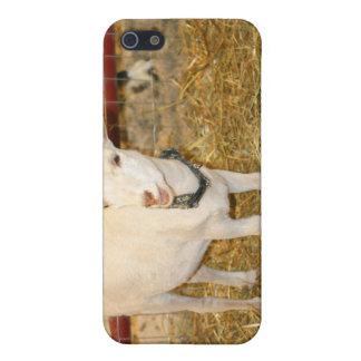 Boca doeling de la cabra de Saanen abierta iPhone 5 Funda