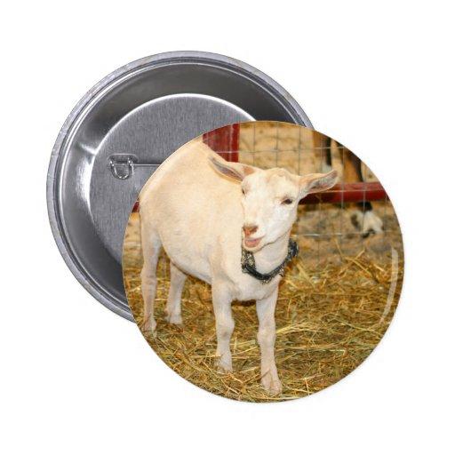 Boca doeling de la cabra de Saanen abierta Pin Redondo 5 Cm