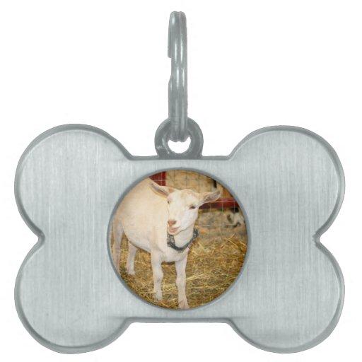 Boca doeling de la cabra de Saanen abierta Placas De Nombre De Mascota