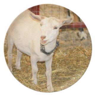 Boca doeling de la cabra de Saanen abierta Plato De Cena