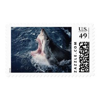 Boca elevada del tiburón abierta sello postal