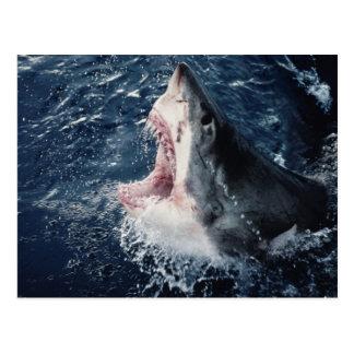Boca elevada del tiburón abierta tarjetas postales