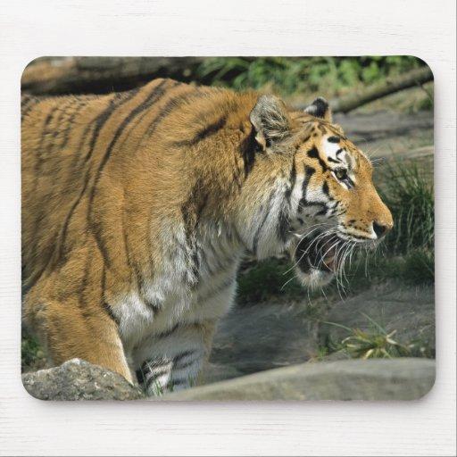 Boca Mousepad abierto del tigre Alfombrillas De Ratones