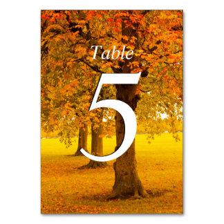 Boda, árboles del otoño, numerados